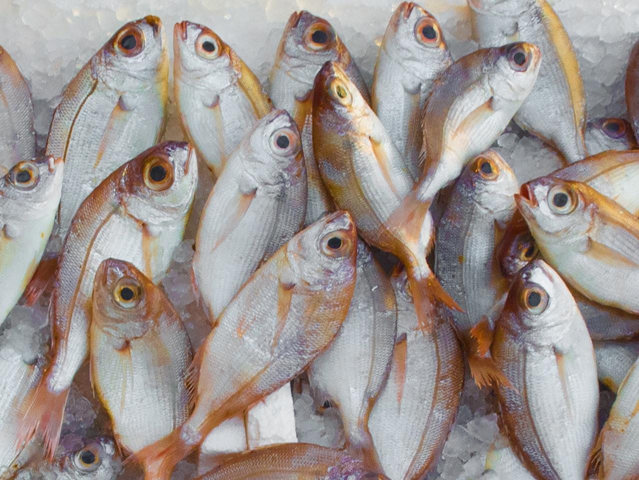 Problemy polskiego rybołówstwa